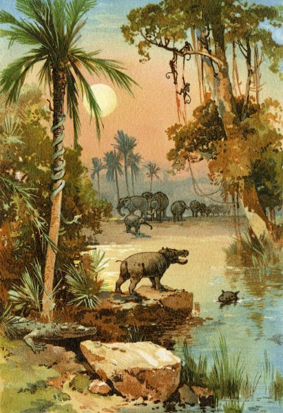 Elephants and hippopotamus along the Congo River. Printed color lithograph reproduction of a 19th-century illustration