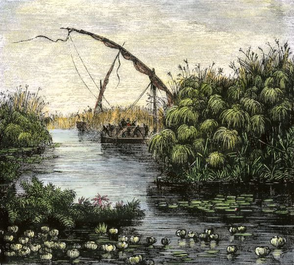 Papyrus growing along the Nile, original paper of the ancient Egyptians. Hand-colored woodcut of a 19th-century illustration