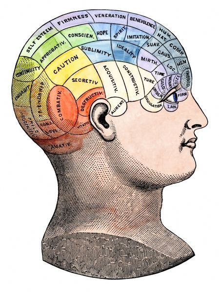Phrenological model of personality traits