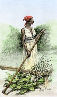 Black slave on a sugar plantation