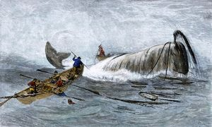 Harpooning a whale, 1800s