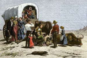 Oxen dying of thirst on a wagon trail