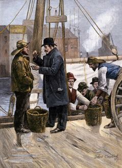 Sampling the Maryland oyster catch, 1800s