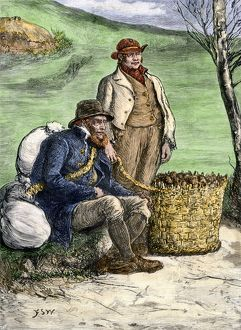 Seed potatoes carried to Ireland, 1800s