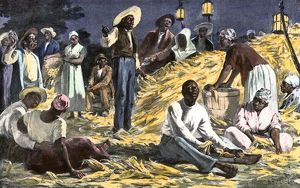 Slaves husking corn on a plantation