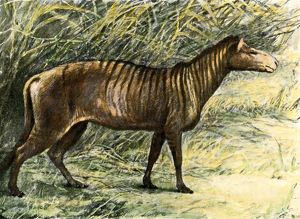 Small three-toed horse from fossil beds in South Dakota
