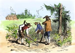 South Carolina colonists planting crops