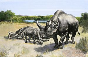 Titanothere, an extinct rhinocerus of North America