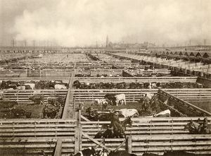 Union Stockyards, Chicago, 1890s