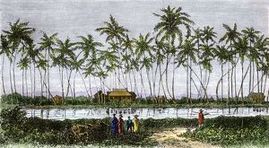 Waikiki village, Hawaii, 1870s